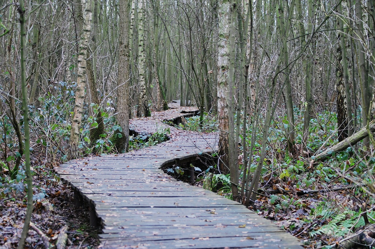 path-forest