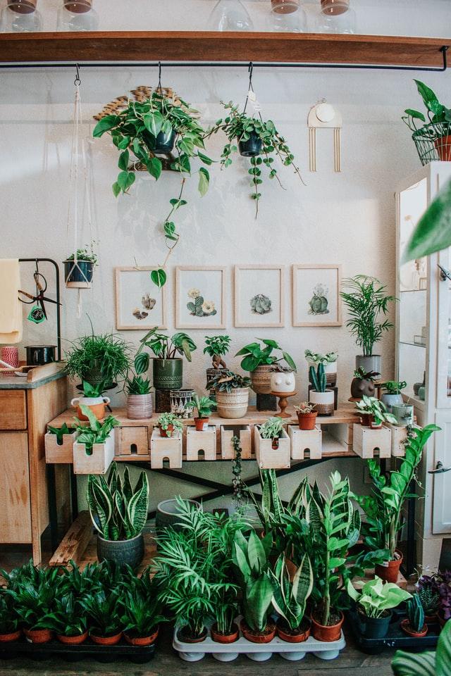flowers-indoor